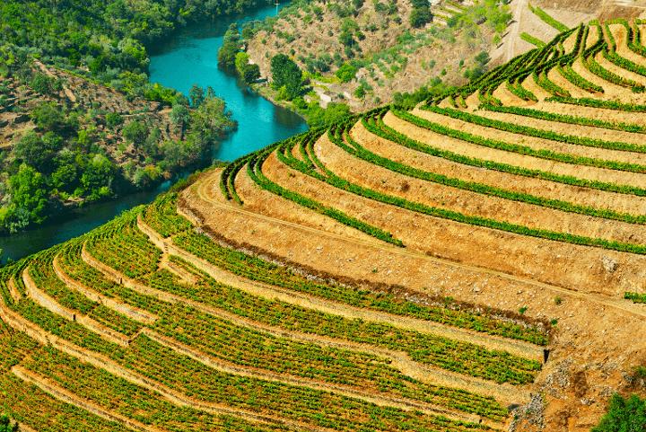 Paisagem de Socalcos verdes e o Rio Douro