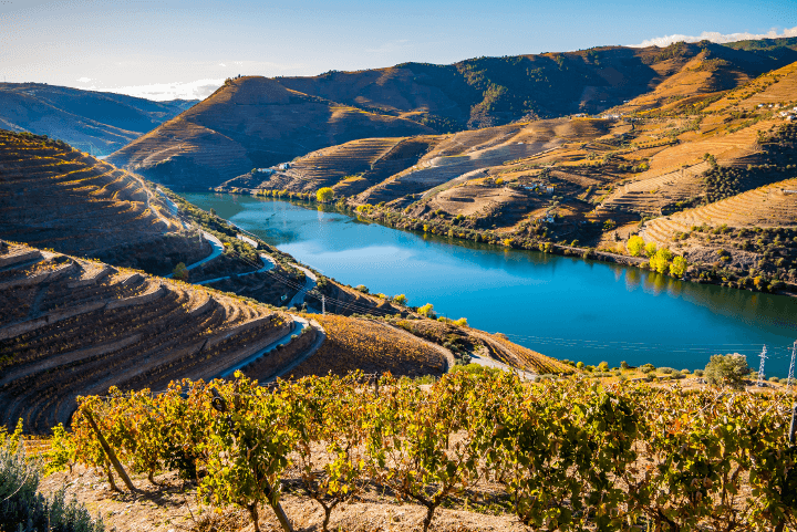 Vale do Douro com vista da vinha e do rio